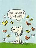 Buttrflies