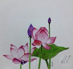 essay about lotus flower The flower is a pure and beautiful creation of nature it is offered to gods and presented to the dear and near ones, because of its beauty and purity it.