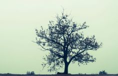 Lonely Tree My Eyes, Lonely, Art Photography, Lens, Fine Art Photography, Klance, Lentils, Loneliness, Artistic Photography