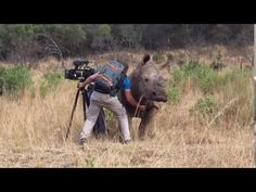 Rhino Sneaks Up To Camera Man, So She Can Get A Belly Rub