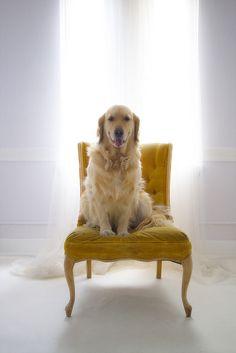 {26/52 2012} Goldie's Chair by VeryViVi, via Flickr