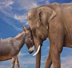 Soulmates are everywhere donkey and elephant #www.pinterest.com/pin/347832771204875566/