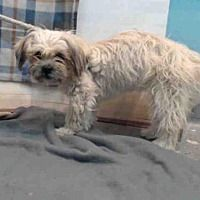 Baldwin Park, California - Maltese. Meet PRINCESS, a for adoption. https://www.adoptapet.com/pet/21342739-baldwin-park-california-maltese-mix