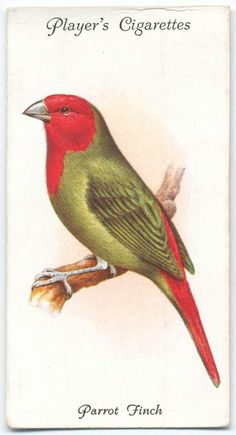 Player's cigarettes aviary & cage birds cards : parrot finch (ca. 1903-1917)