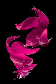 We swim in Shocking Pink !