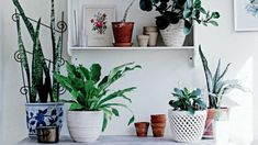 How to choose the ideal indoor plant - Homelife.com.au
