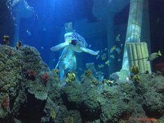 Arcade, Portugal, Port Elizabeth, Aquarium, Spain, Santiago De Compostela, Goldfish Bowl, Aquarium Fish Tank, Sevilla Spain