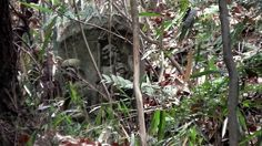 A Buddhist Icon camouflaged by the bush.