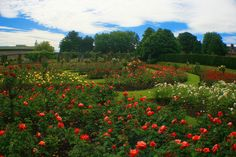 Sir Thomas and Lady Dixon Park, South Belfast, Northern Ireland #gardens #gardentourism