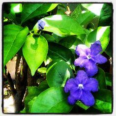 Flores novas no jardim! @fabilage- #webstagram