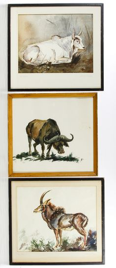 Lot 468: R. Miles (American, 20th Century) Watercolor on Paper Assortment; Three undated items including a water buffalo signed bottom center, an Indian zebu and a sable antelope, both signed and titled on the mat