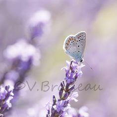 Petit tour vers la mauve-violet ...