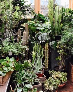 We hope everyone is finding some restful space to share with friends and family today. Our shop is closed for the day as we do just that! Well be back to loving these plants at the regular time tomorrow. Happy Thanksgiving!