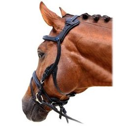 LOVE these innovations to help horses stay more comfortable while under tack. // 2500 Freedom Bridle   Stubben