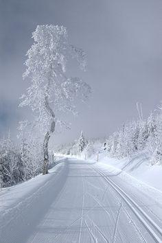 Snow-Road-Trees
