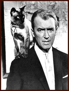 Siamese Cats - James Stewart and his Siamese Cat
