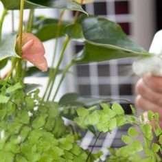How to raise humidity for houseplants