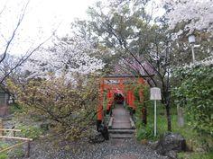 平野神社 2017.04.11