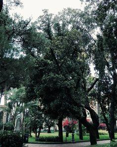 Voglio un po' di fresco. Punto. Buonanotte.  Edit with @vscoG3  #italia #italy #campania #salerno #buonanotte #goodnight #photography #photooftheday #photo #landscape #landscapephotography #landscape_captures #landscape_lovers #amazing #awesome #followme #seguitemi #vsco #vscocam #vscoitaly #livesalerno #paesaggisalernitani #lacittadisalerno