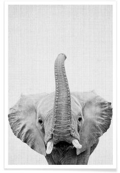 Print 50 als Premium Poster von Lila x Lola Animals Black And White, Black And White Pictures, Black White, Elephant Love, Elephant Art, Elephant Poster, Animals And Pets, Baby Animals, Cute Animals