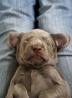 20 Precious Photos Of Sleeping Puppies