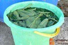 Jak připravit výluh z kopřiv. Garden Hose, Green Beans, Vegetables, Outdoor, Gardening, Youtube, Compost, Outdoors, Lawn And Garden
