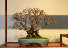 Capital Bonsai | The personal bonsai blog of Aarin Packard, Assistant Curator of the National Bonsai & Penjing Museum | Page 2