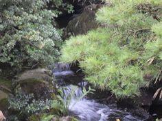 Beautiful water gardens in Matsue, Japan. Gardens Of The World, Water Gardens, Water Features, Home And Garden, Japan, Amazing, Plants, Beautiful, Water Sources