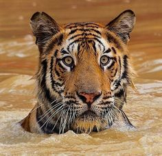 Untitled by NielaGuzman #animals #animal #pet #pets #animales #animallovers #photooftheday #amazing #picoftheday