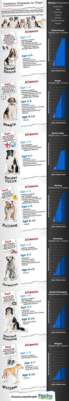 Things to consider before you add a companion to your family is the type of health factors that each breed has. Different breeds have different life spans and higher/ lower risks for illnesses and diseases. Take a look at this chart if your having difficulties choosing which breed is best for you.