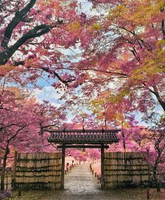"""今しかできない思い出を。日本全国の""""春の季節限定""""絶景桜スポット7選2017"""