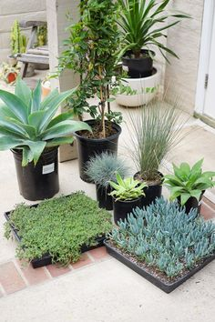 Planting a Raised Garden Bed - Dalla Vita Small Backyard Gardens, Outdoor Gardens, Planting Succulents, Planting Flowers, Agave Plant, Ground Cover Plants, Raised Garden Beds, Side Garden, Balcony Garden