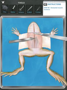 Frog Dissection App