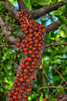 ladybug Photo by Orhan Kartal -- National Geographic Your Shot The ladybugs made the tree look so bright! Cool Insects, Bugs And Insects, Nature Animals, Animals And Pets, Cute Animals, Beautiful Bugs, Amazing Nature, Photo Coccinelle, Beautiful Creatures