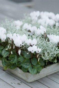 bloembakken voor de winter