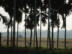 Gobindonagar, Jamalpur , Bangladesh.  My mom's village.... ^_^ .... a place where i find peace and simplicity.... :) #trail #Bangladesh #travel #2k12