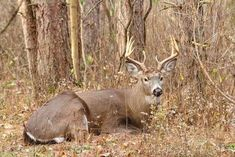 Things hunters don't know about whitetails