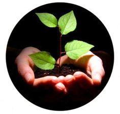 Global Business, Plum, Fruit, Food, Essen, Meals, Yemek, Eten
