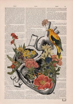 Cyber Monday Sale Flowery Heart with bird. Anatomy Print by PRRINT