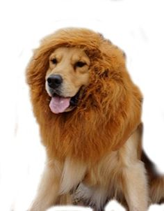 SpeedControl Super Cool Large Pet Dog Cat Lion Wigs Mane Hair Festival Party Fancy Dress Clothes Costume Color Brown -- Want to know more, click on the image.