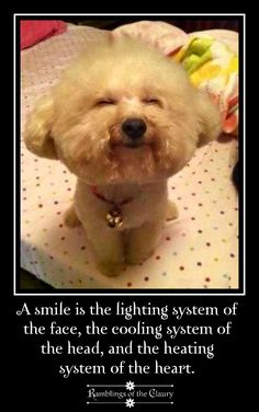 A smile is the lighting system of the face, the cooling system of  the head and the healing system of the heart #smile #life #heart