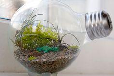 A terrarium made from a lightbulb  www.imaxpremier.com