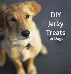Petco and PetSmart Ban Chinese Made Treats + DIY Jerky Recipes for Dogs
