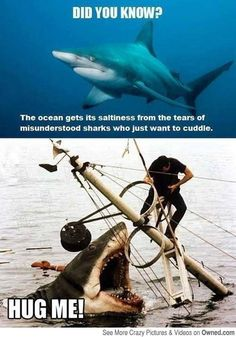 Funny pictures about Sad Misunderstood Shark. Oh, and cool pics about Sad Misunderstood Shark. Also, Sad Misunderstood Shark photos. Funny Shit, Funny Cute, Funny Jokes, Funny Stuff, Super Funny, Random Stuff, Funny Comedy, Comedy Films, Funny Animal Memes