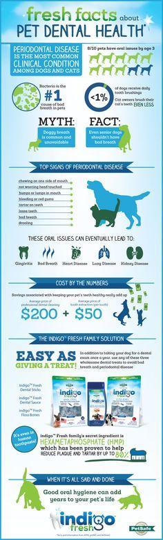 #Pet dental health information! Keep their teeth #healthy and #clean!