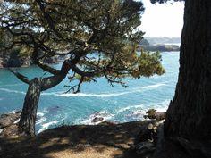 State Parks, Water, Plants, Garden, Travel, Outdoor, Voyage, Garten, Trips