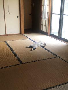 台風の日、野良猫を家の中に入れたら…「最初からここに住んでました」レベルの寝相が話題(まいどなニュース) - Yahoo!ニュース Japan Room, Animals And Pets, Cute Animals, Cutest Thing Ever, Animals Beautiful, Cute Dogs, Dog Cat, Yahoo, Twitter