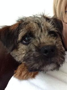 Just one little pet when you get a chance, I don't want to bother, Please...Border terriers' are such Eeyores!