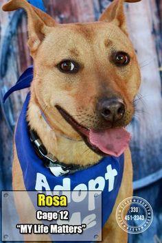 ***URGENT! 11/1/16 Meet 12 Rosa, an adoptable Labrador Retriever looking for a forever home. Dog • Labrador Retriever Mix • Young • Female • Medium - Stark County Dog Warden Department Canton, OH