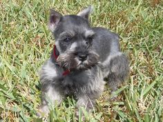 Jade when she was a puppy